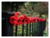 Poppies adorn Dunblane in lead up to Armistice Day